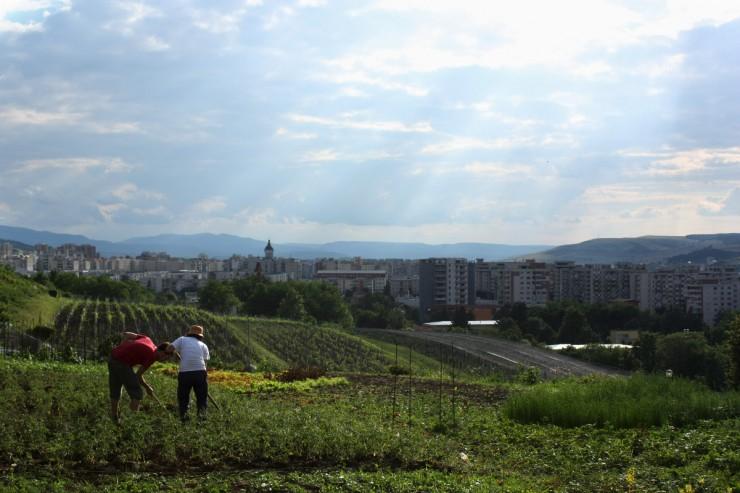 Folyik a munka az Eco Ruralis génbankként működő kertjében. Fotó: arc2020.eu