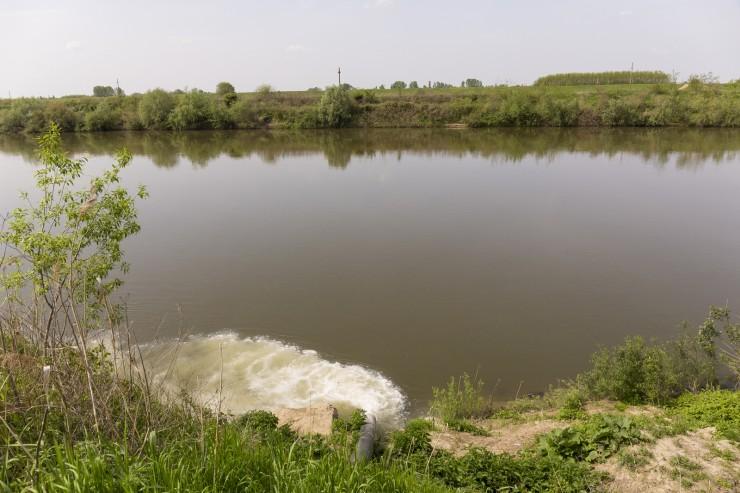 Fehér színű szennyvíz ömlik a Szamosba a vetési húsfeldolgozótól nem messze. Fotó: Móricz Csaba