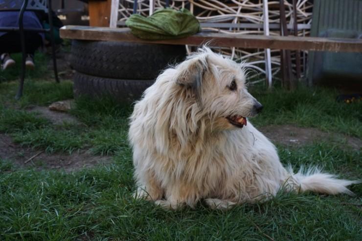 Betti, a ház kutyája