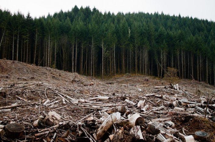 Tovább fosztogatja a romániai erdőket a Schweighofer