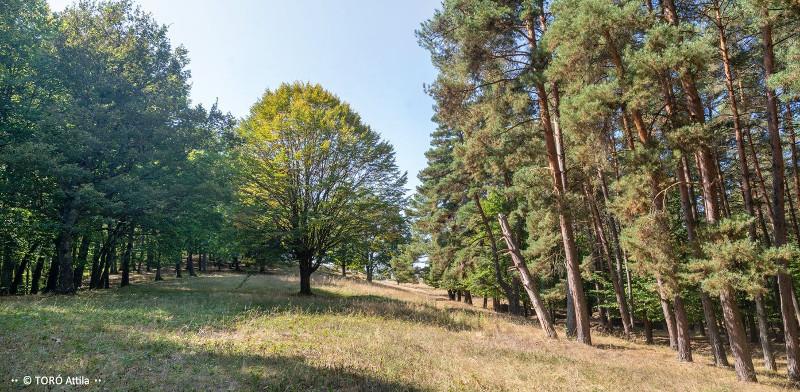 A honvéd-kúti erdő